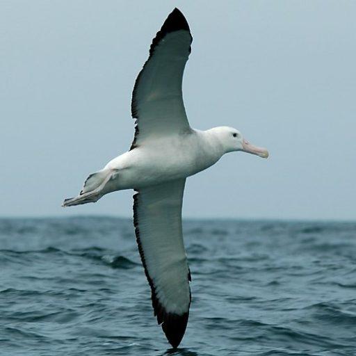 cropped-albatros.jpg